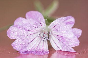 Roze bloem met stampers von Irene Lommers