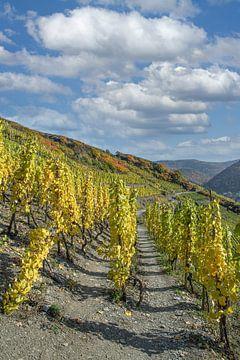 op de rode wijn wandelroute in de Ahr vallei van Peter Eckert
