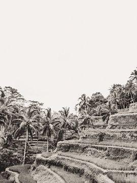 Tegalalang Reisterrasse / Reisfelder Ubud Bali 3 von Photo Atelier
