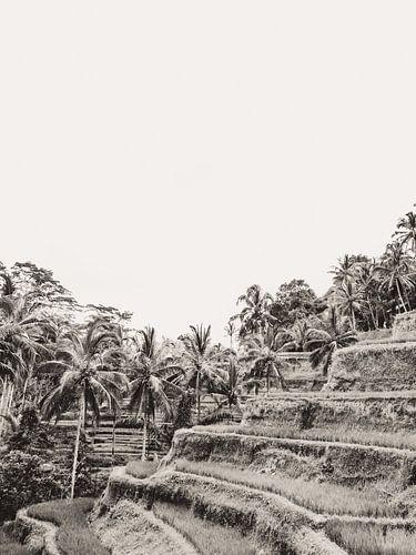 Tegalalang Rijstterras / rijstvelden Ubud Bali 3