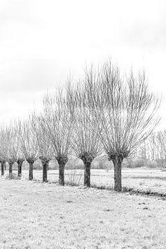 Knotwilgen bij de Reeuwijkse Plassen von Leontien van der Willik-de Jonge