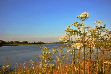 Flora aan de oever van de rivier van M de Vos