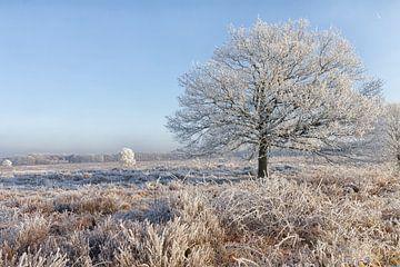 Winters beeld op de Ginkelse heide in Nederland  van Rijk van de Kaa