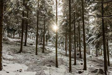 Winterbos van Christoph Schaible