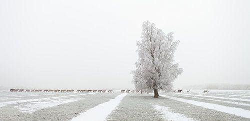 The Long March - Konikpaarden in de sneeuw
