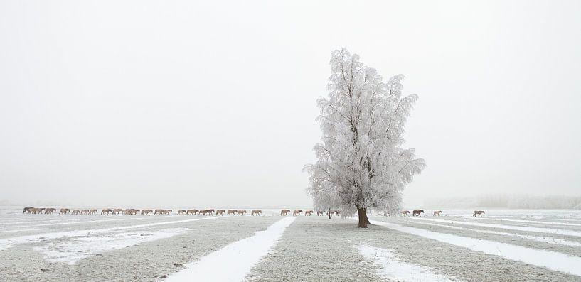 The Long March - Konikpaarden in de sneeuw van Bas Meelker