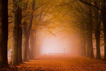 Het bos in. van Ton Drijfhamer