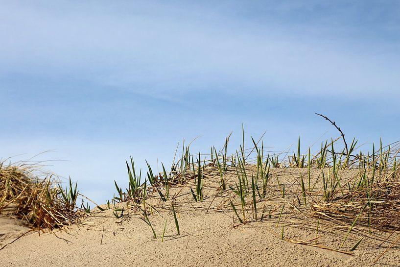 Junge Sprosse von Ostsee Bilder