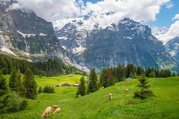 Uitzicht op de bergen Eiger en Mattenberg bij Grindelwald in Zwitserland van Peter Apers