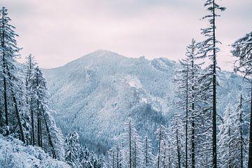 Winterberge im Schnee von Patrycja Polechonska