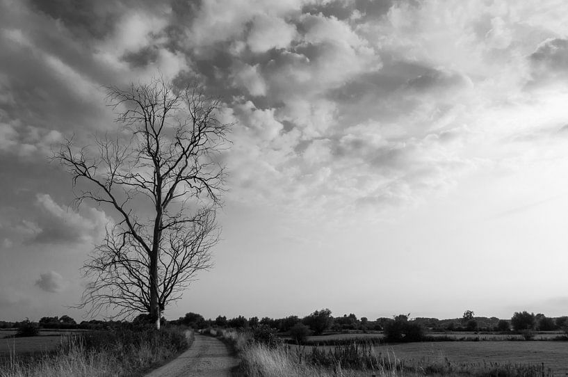 Landschap van Sander Strijdhorst