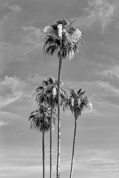 Palmenidylle | Monochrom von Melanie Viola