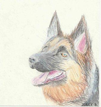 Deutscher Schäferhund von Jerzy Beerepoot