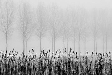 Bomen in de mist van