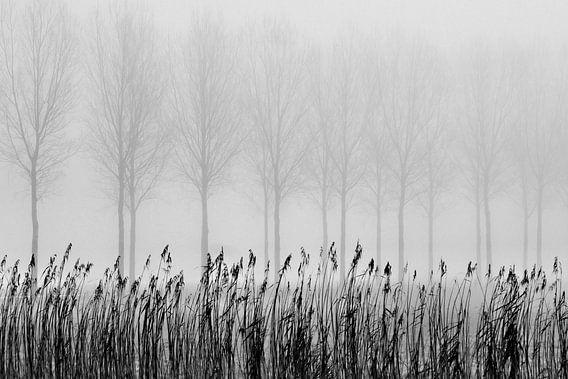 Bomen in de mist van Paul Arentsen