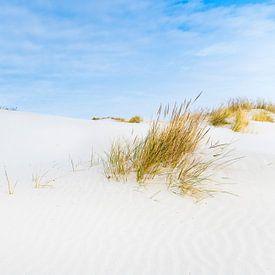 Dunes à Schiermonnikoog, île des Wadden, pendant une belle journée d'hiver sur Sjoerd van der Wal
