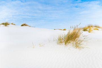 Duinen op het Waddeneiland Schiermonnikoog tijdens een mooie winterdag van