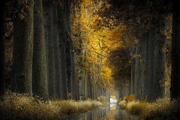November Rain van Kees van Dongen