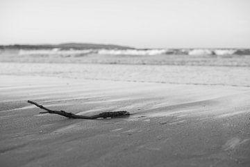 Gestrandeter Ast am Strand von DsDuppenPhotography