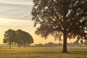 Zacht ochtendlicht over weilanden van Jasper van de Gronde