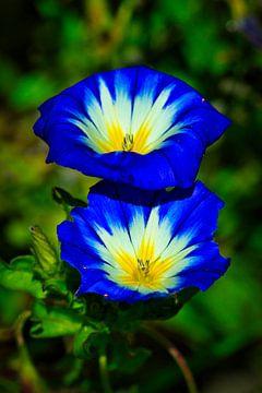 bijzondere bloemen van Wietske Uffelen