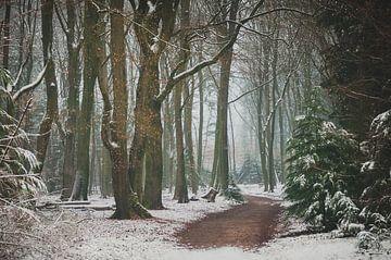 Sneeuw in het Speulderbos van Nancy van Verseveld