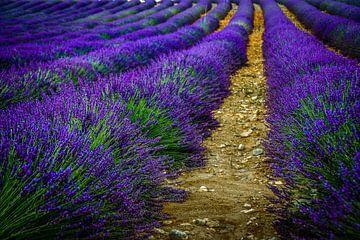 Lavendel von Erwin Floor