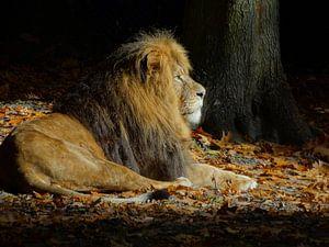 Leeuw in de herfst van Merel de Ling