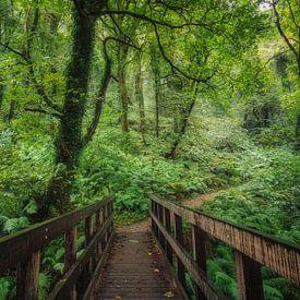 Brug naar het vochtige bos van Joris Pannemans - Loris Photography