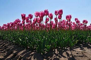 Roze tulpen von Jeannette Penris