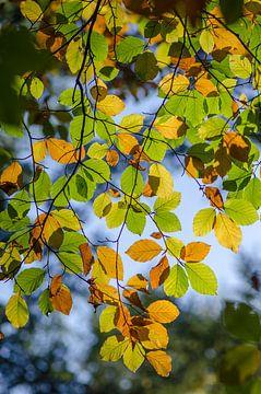 Herfstbladeren van Mark Bolijn