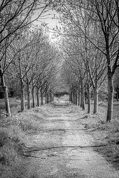 Het pad von Martijn .