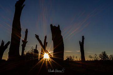 suncatch van Nicole Harren