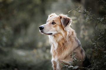 Portrait Hund Seitenprofil Sommer von Lotte van Alderen