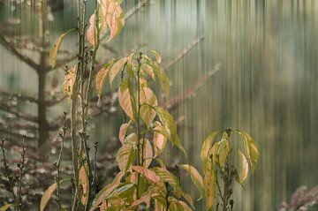 Frühlingserwachen im Wald von Christine Nöhmeier