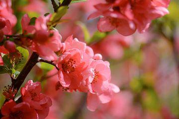 roze rood van Tania Perneel