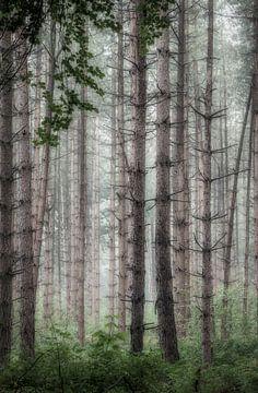 Mystischer Wald von Connie de Graaf