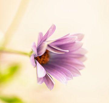 Blume von Ron Kleinjans