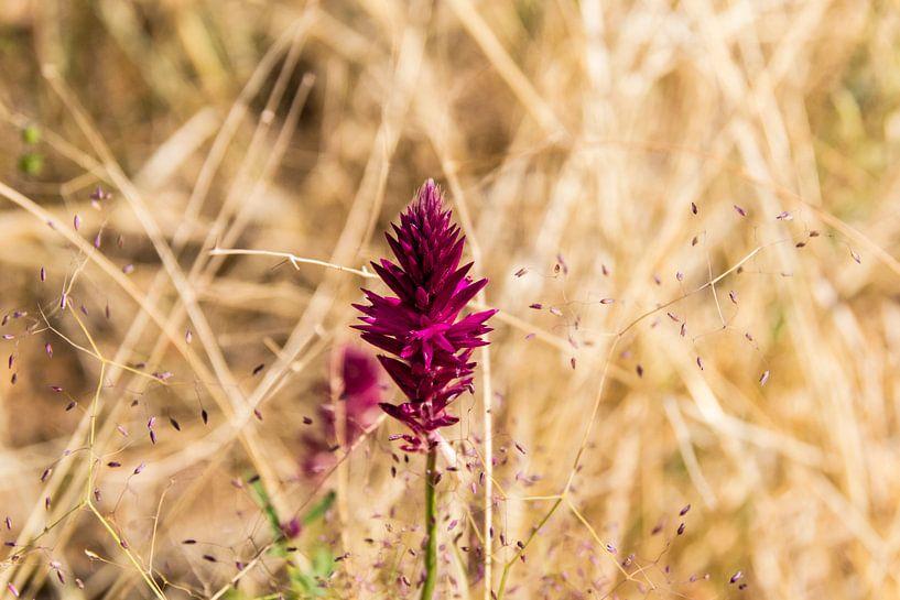 Pinky Flower van Sander RB