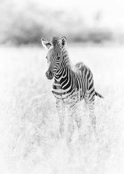 Schattige baby zebra van