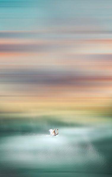 Swan van Jacky Gerritsen