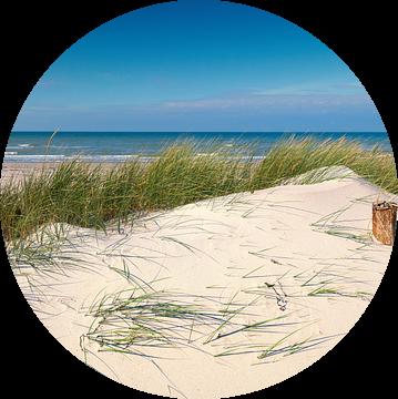 Oostzee - Duin in zomerwind van Reiner Würz / RWFotoArt