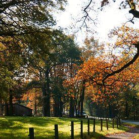 Een landelijke omgeving in Duitsland. van Wieland Teixeira