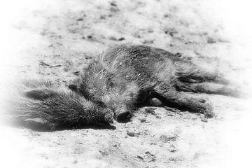 Wildschweinferkel - wild boar piglets von Dagmar Marina