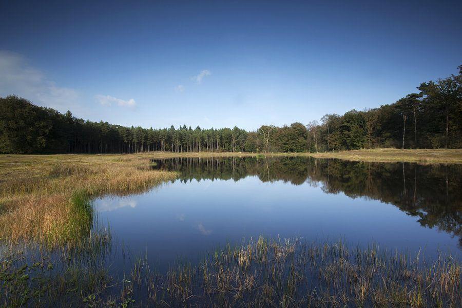 Ven met rij bomen in het water weerspiegeld.