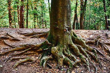 Baumstamm mit Wurzeln und Wald im Hintergrund von 77pixels