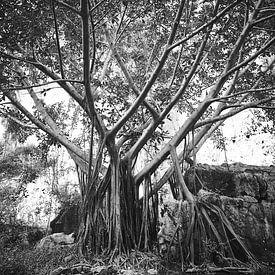 boom met vreemde wortels in Phong Nha-Ke Bang National Park van Karel Ham