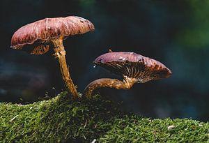 Sprookjesachtige paddenstoel in het herfstbos