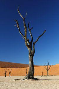 Dead tree at Deadvlei Namibia van