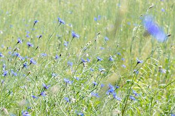 veld met korenbloemen van Hanneke Luit